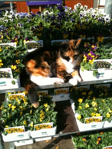 Hunt the Hastings Garden Centre Kitty