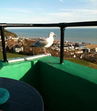 The Hastings Scone Survey continues
