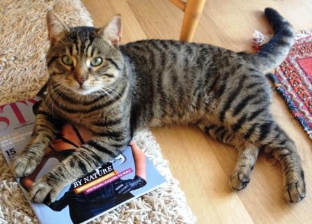 Bluebell Ridge cat Digby joins Battleaxe household