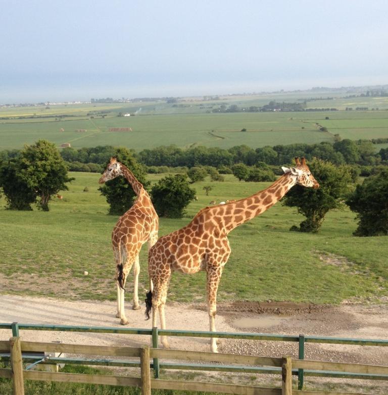 Livingstone Lodge Safari stay, Port Lympne