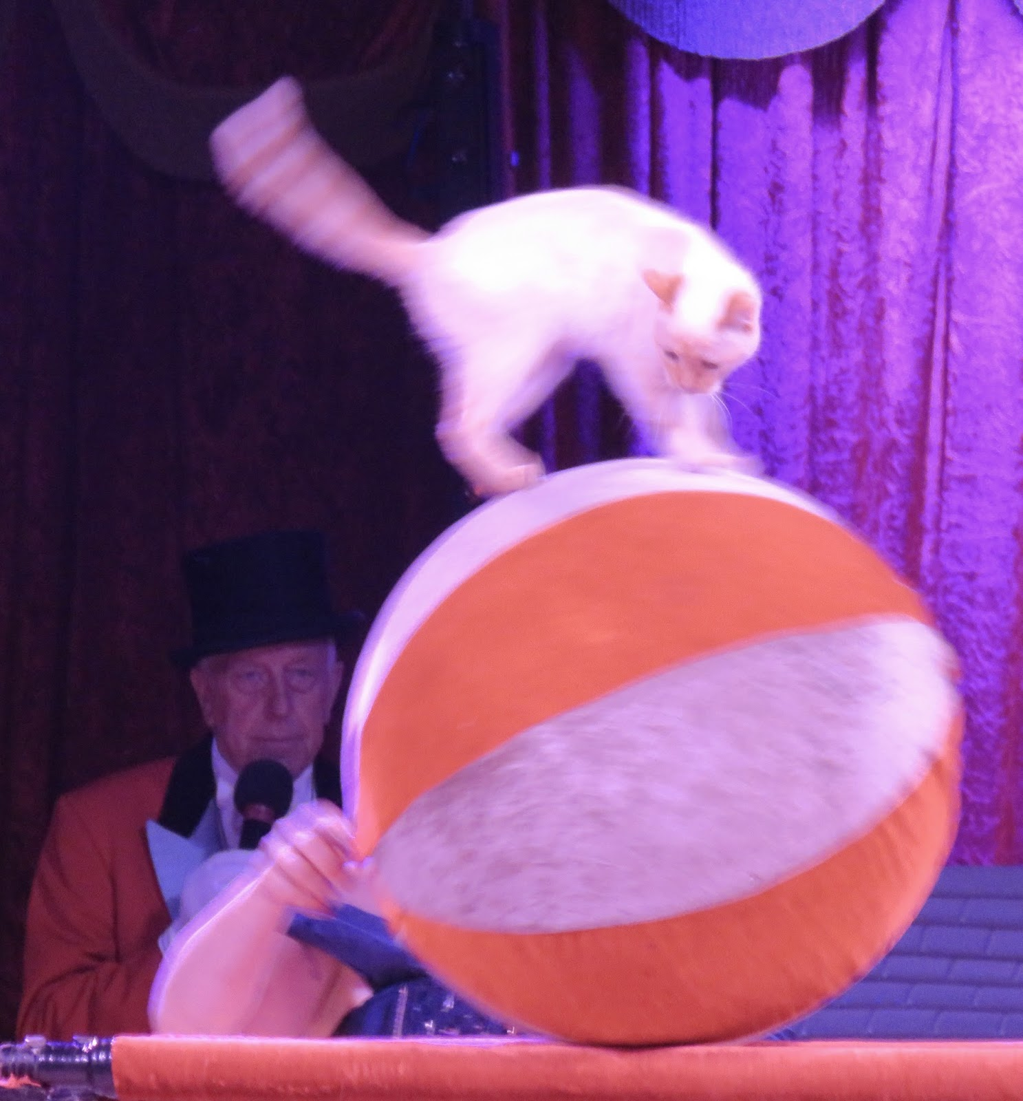 Zippo's Circus in Brighton – with performing cats!