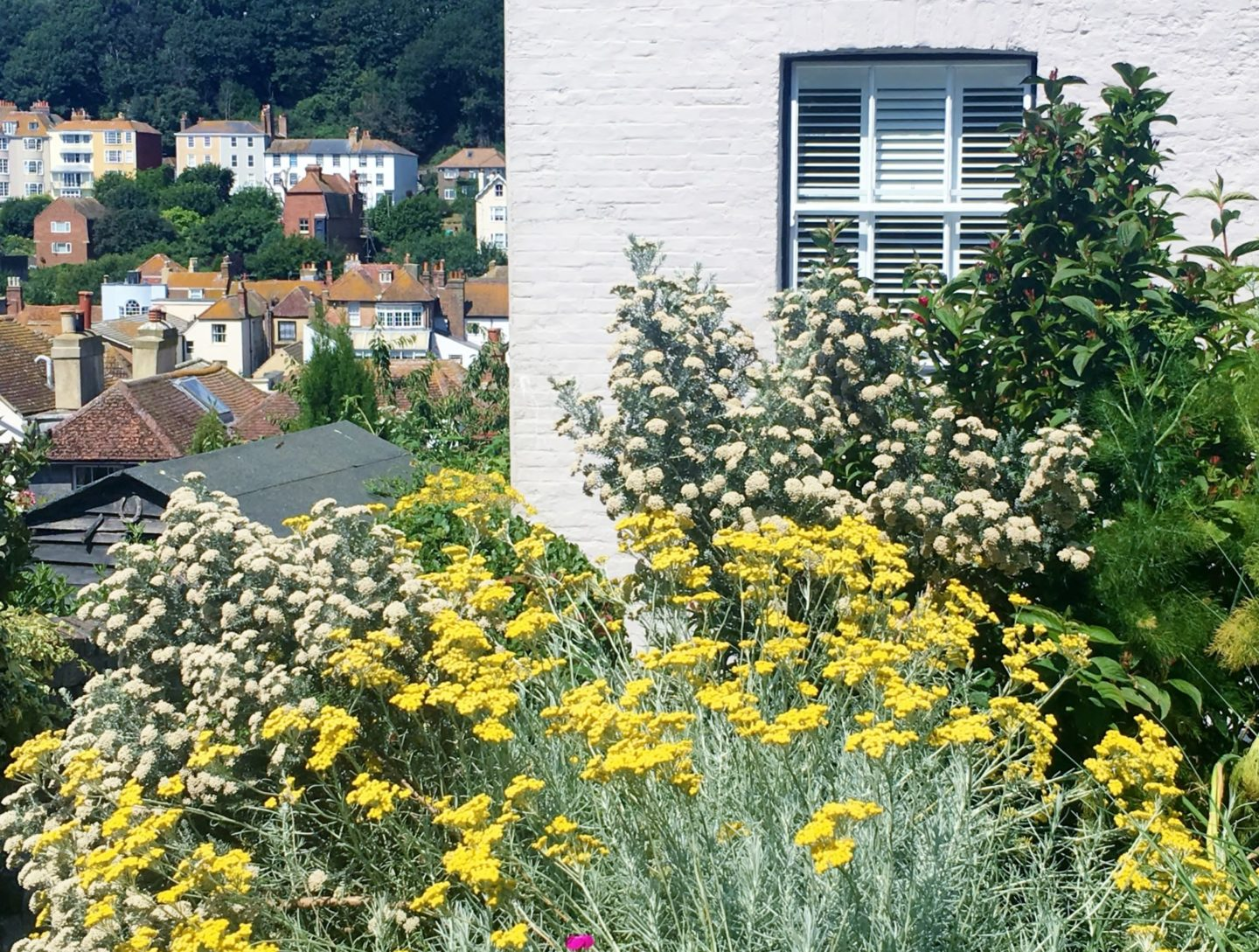 Hastings Old Town open gardens