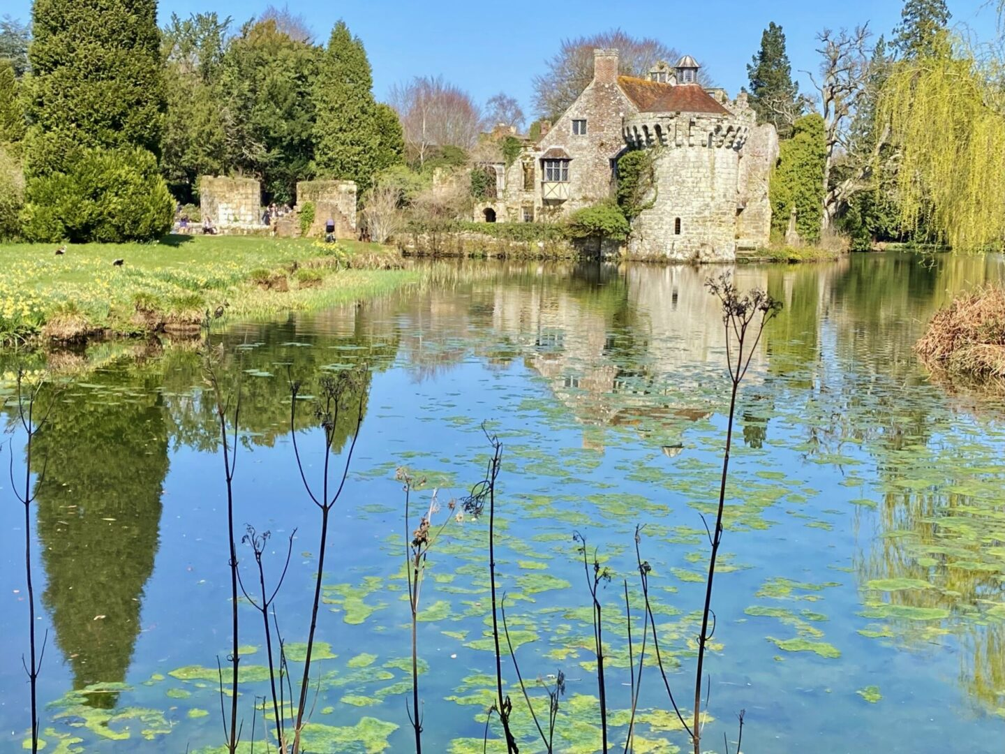 Scotney Castle – and a glimpse of herons